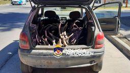 altText(Secuestran gran cantidad de astas de ciervo en San Martín)}