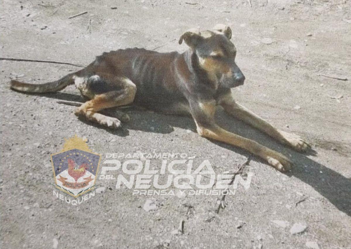 San Martín: rescataron a un perro maltratado