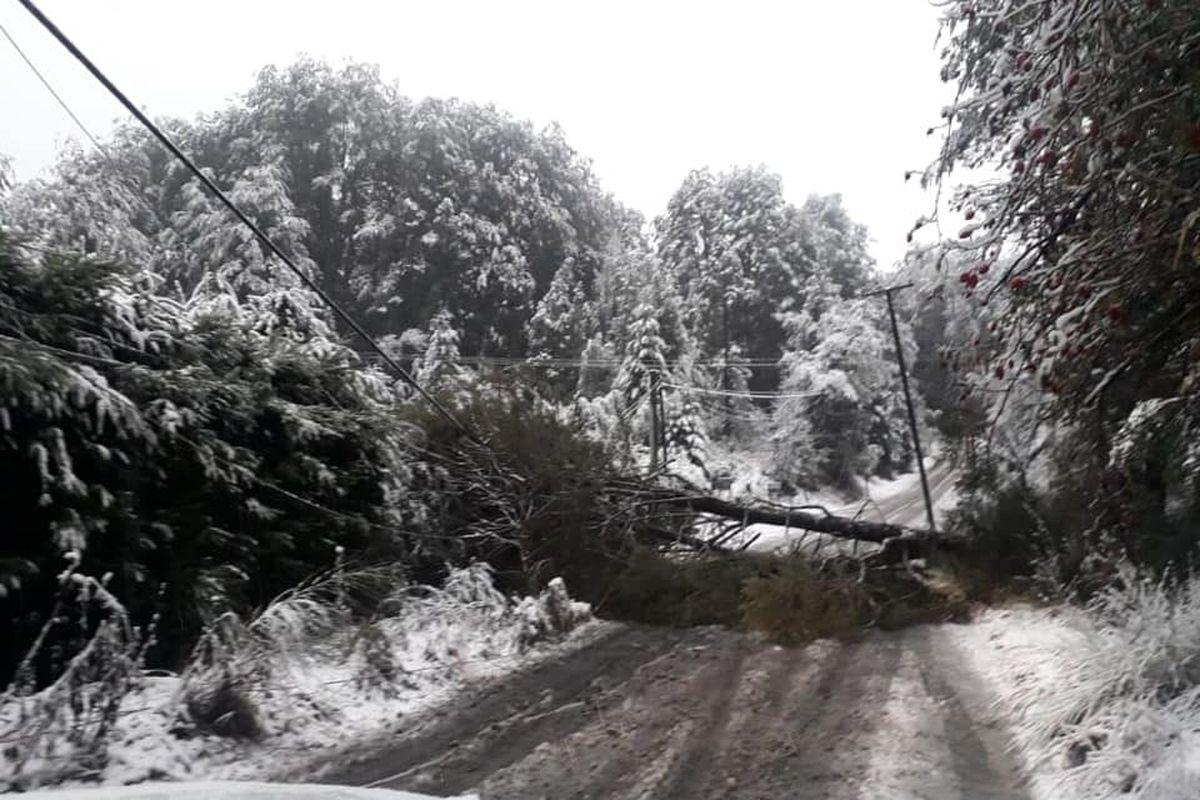 Tras el alud, un árbol cayó sobre una hostería en Angostura